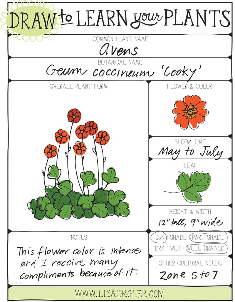 Apr 30 Draw Your Plants Worksheet Worksheets Plants And Gardens