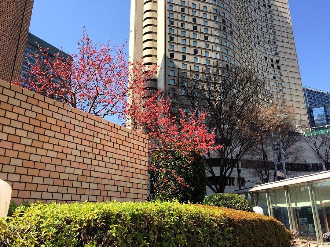 第一生命ビルとヒルトンホテル新宿ところどころに春のかけらを見つけて街を眺める#hiltonhotel #shinjuku #tokyo