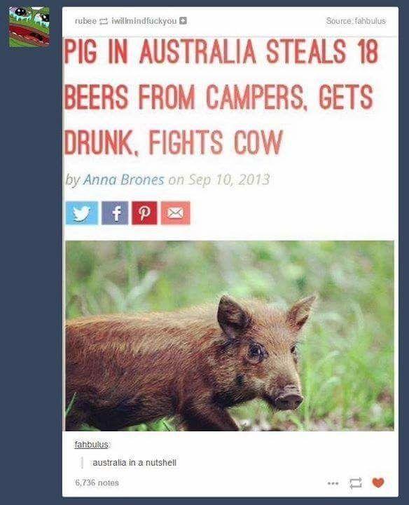 A Few Of My Favorite Thingssss Okay More Than A Few Australia Funny Aussie Memes Australian Memes