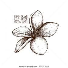 Image Result For Frangipani Flower Outline Flower Outline Flower Drawing Small Flower Tattoos