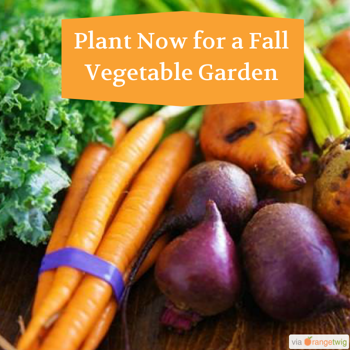 Plant Now For A Fall Vegetable Garden