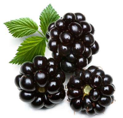 by Mount Baker Vapor >>  BLACKBERRY ELECTRONIC CIGARETTE FLAVORING Search with Mt Baker Vapor Coupon Code >> http://revealcoupons.com/stores/mtbakervapor-coupon-promocode/