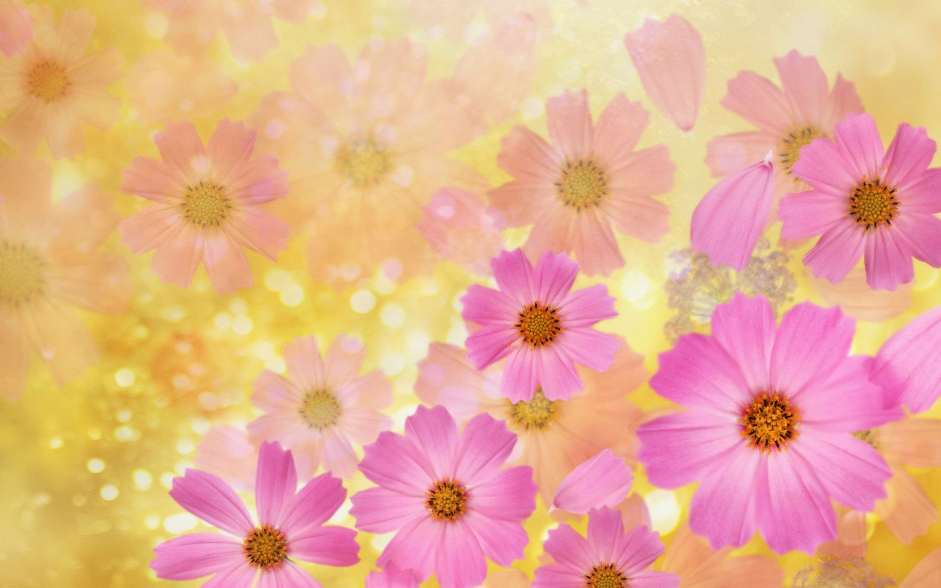 8128 Beautiful Spring Flowers Jpg 1920 1200 Flower Backgrounds Spring Flowers Background Pink Flowers Background