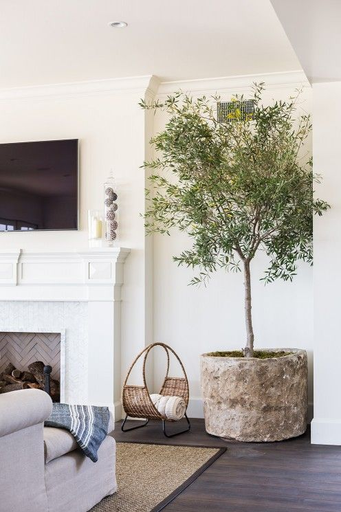 living room tree decorating ideas gray couch rooms furniture pinterest indoor trees