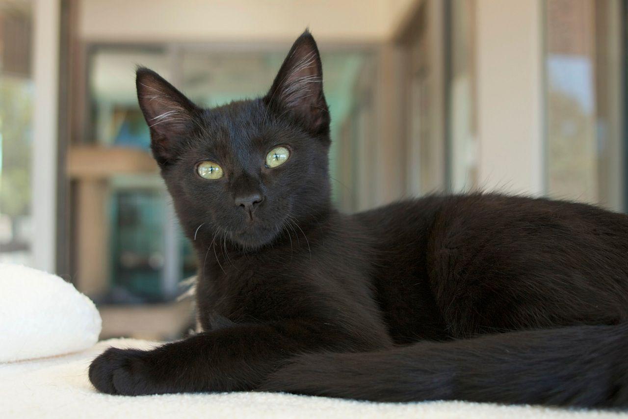 Cruz Kitten Adoption Cat Training Cat Adoption