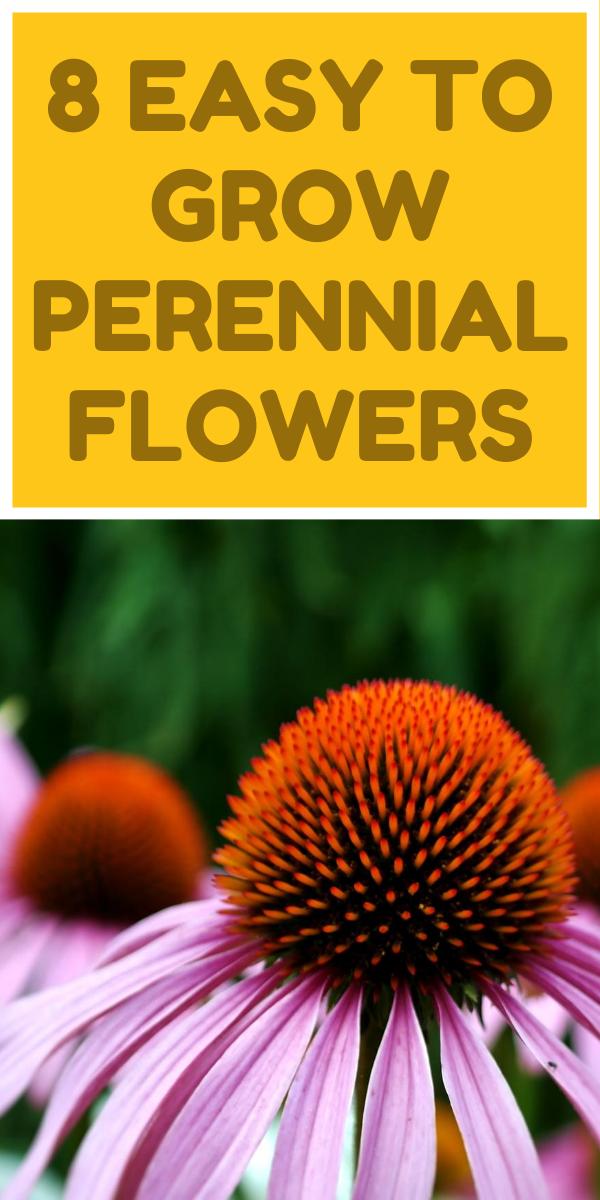 8 Easy To Grow Perennial Flowers Gardening Sun In 2020 Flowers Perennials Gardening For Beginners Growing Vegetables