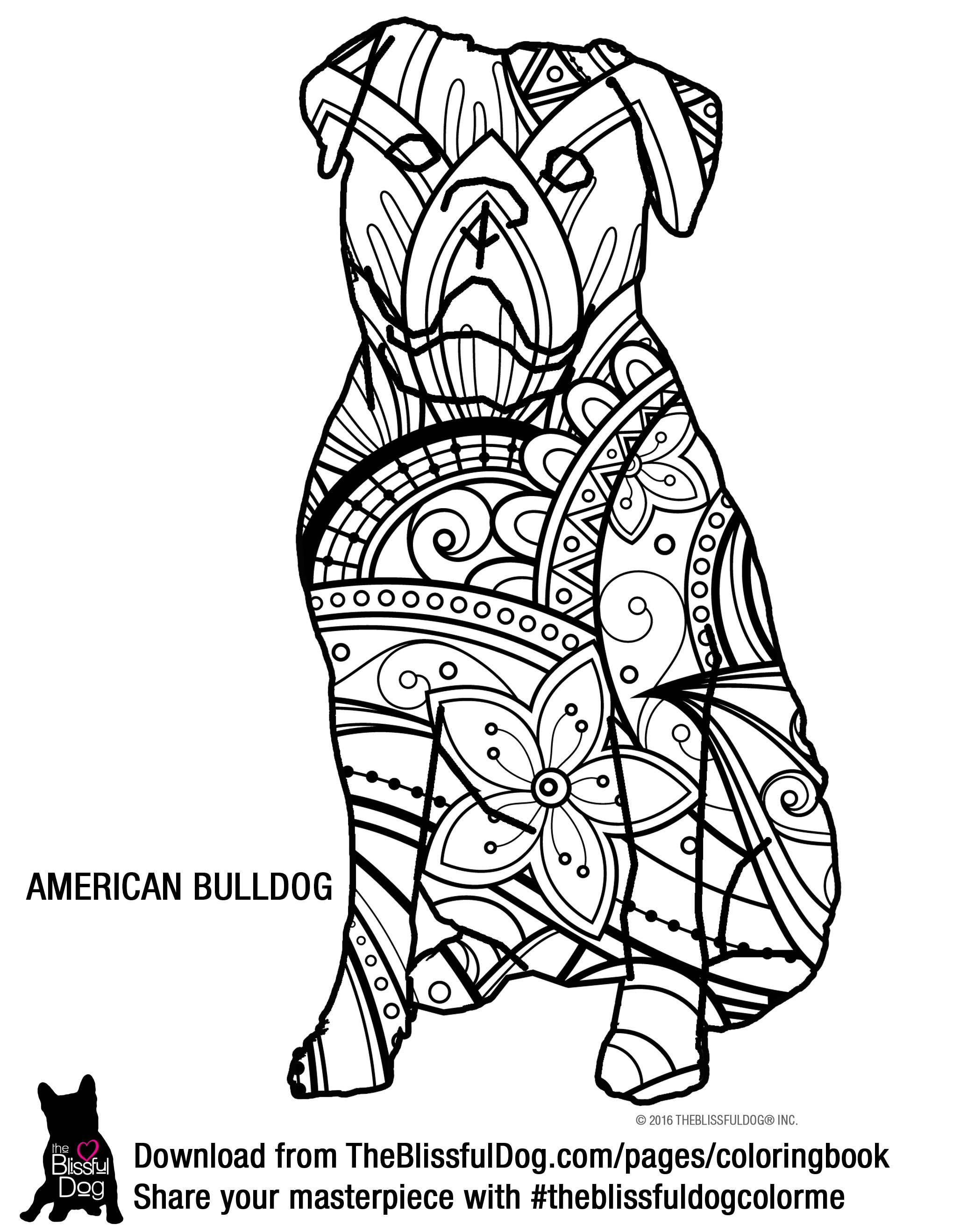 Pin em American Bulldog