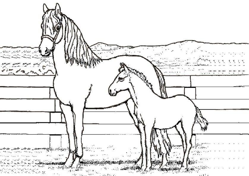 Pferde 2 Ausmalbild Ausmalbilder Pferde Ausmalbilder Pferde Zum Ausdrucken Pferde Bilder Zum Ausmalen