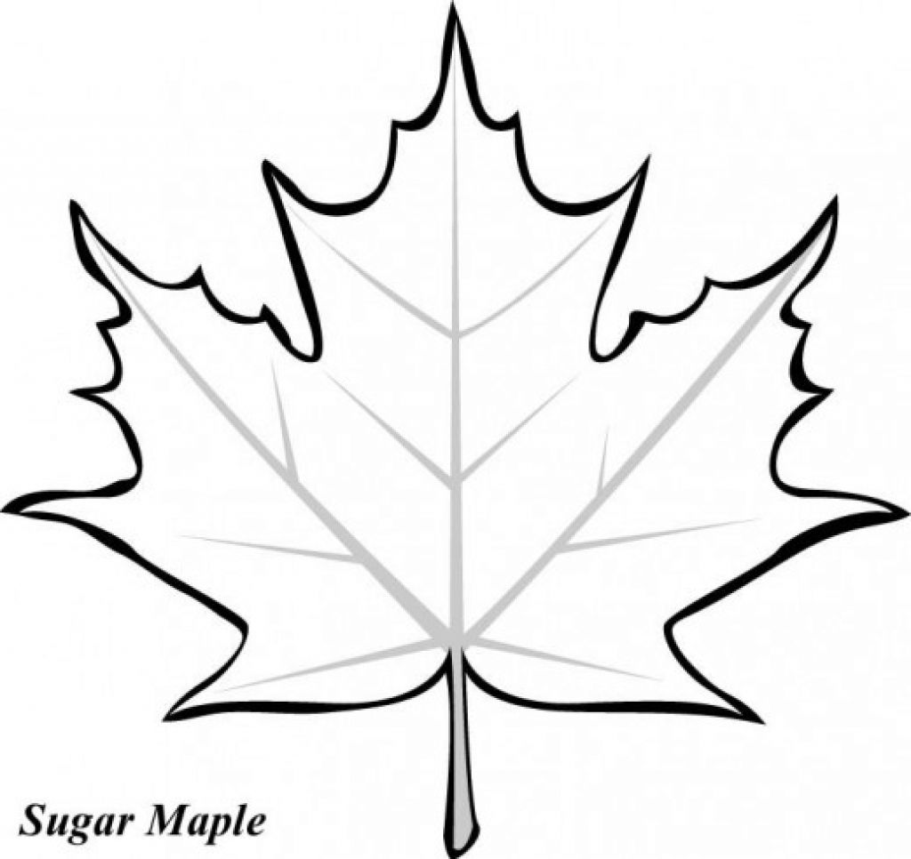 - Sugar Maple Leaves Coloring Pages (With Images) Leaf Template