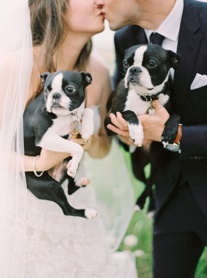 Romantic Calgary Lake House Wedding Boston Terrier Boston