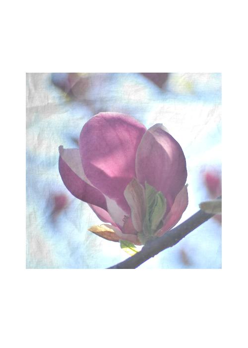 Silk Square Scarf - SPRING BLOSSOMS by VIDA VIDA tdukraOLn