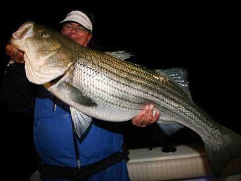 Caught and also released big 15-pounder striped bass. Big Fish caught on live eels