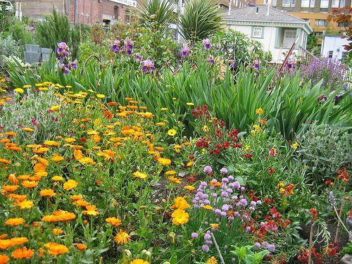 Public Flower Garden In Downtown Seattle 1001 Gardens