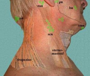 Lymphedema Drainage Back Lymphatic Drainage Neck