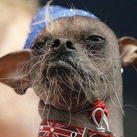 Conoce A Los Perros Mas Feos Del Mundo Perros Feos Feos Del Mundo Fotos De Animales Raros