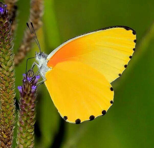 #Butterfly su belleza se despliega en sus alas #mariposas