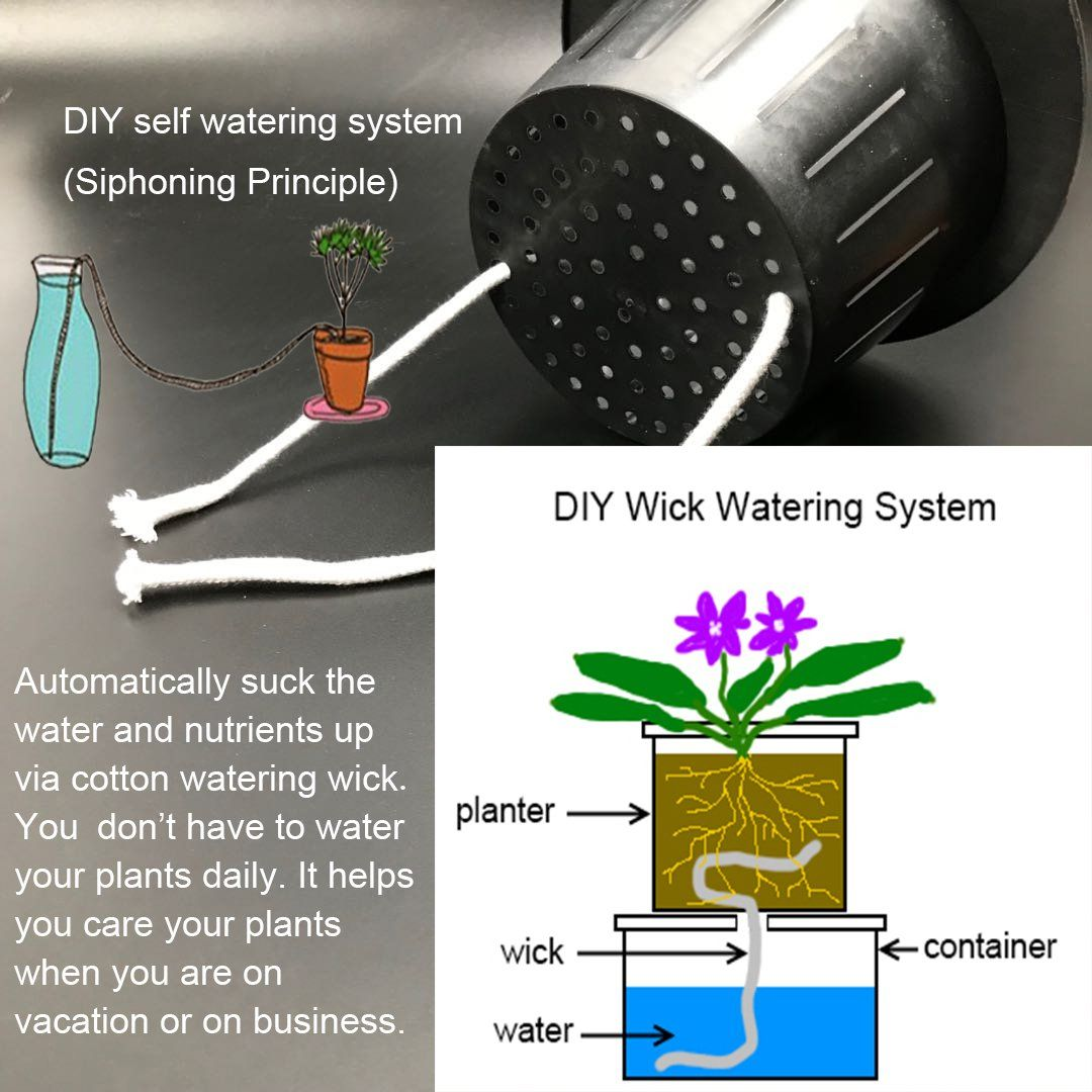 50 Feet Self watering Wick Cord for Vacation Self-watering Planter Pots DIY Automatic Watering Device System Potted Plant Sitter Auto Drip Irrigation Waterer to Water African Violet Cotton String Rope #selfwatering