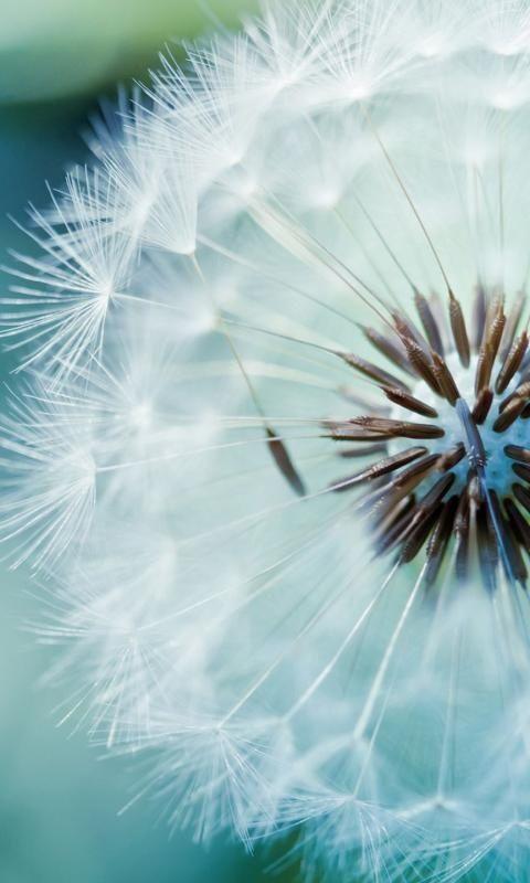 25 köstliche Blumenfotos – Schönheit der Natur – #Schönheit #Köstlich #Blume …