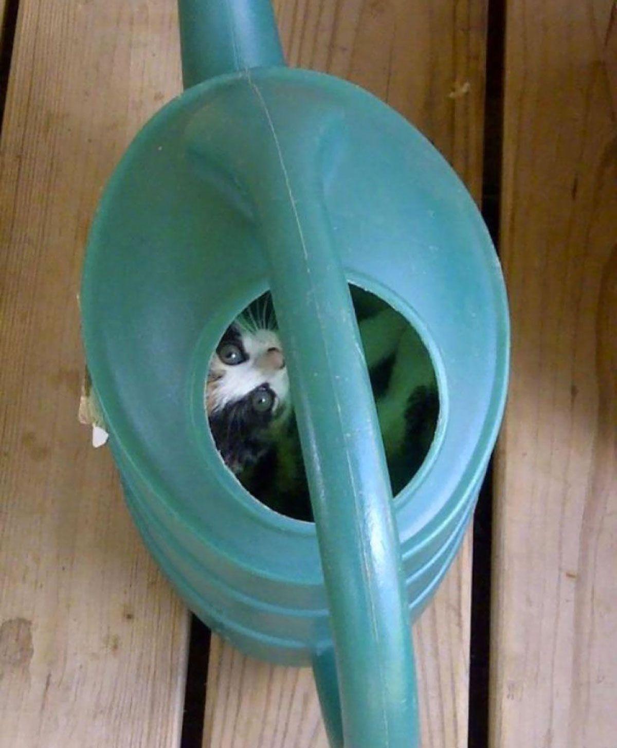 30-ninja-cats-that-have-mastered-the-ancient-art-of-ninjutsu13