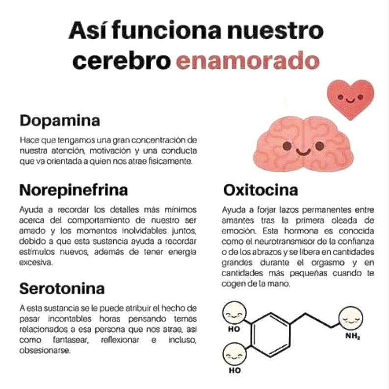 Acción de los neurotransmisores en estado de amor. | Psicobiología,  Neurotransmisores, Neuroanatomia