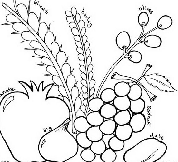 Sukkot coloring pages for Kids | חגים טו בשבט | Pinterest