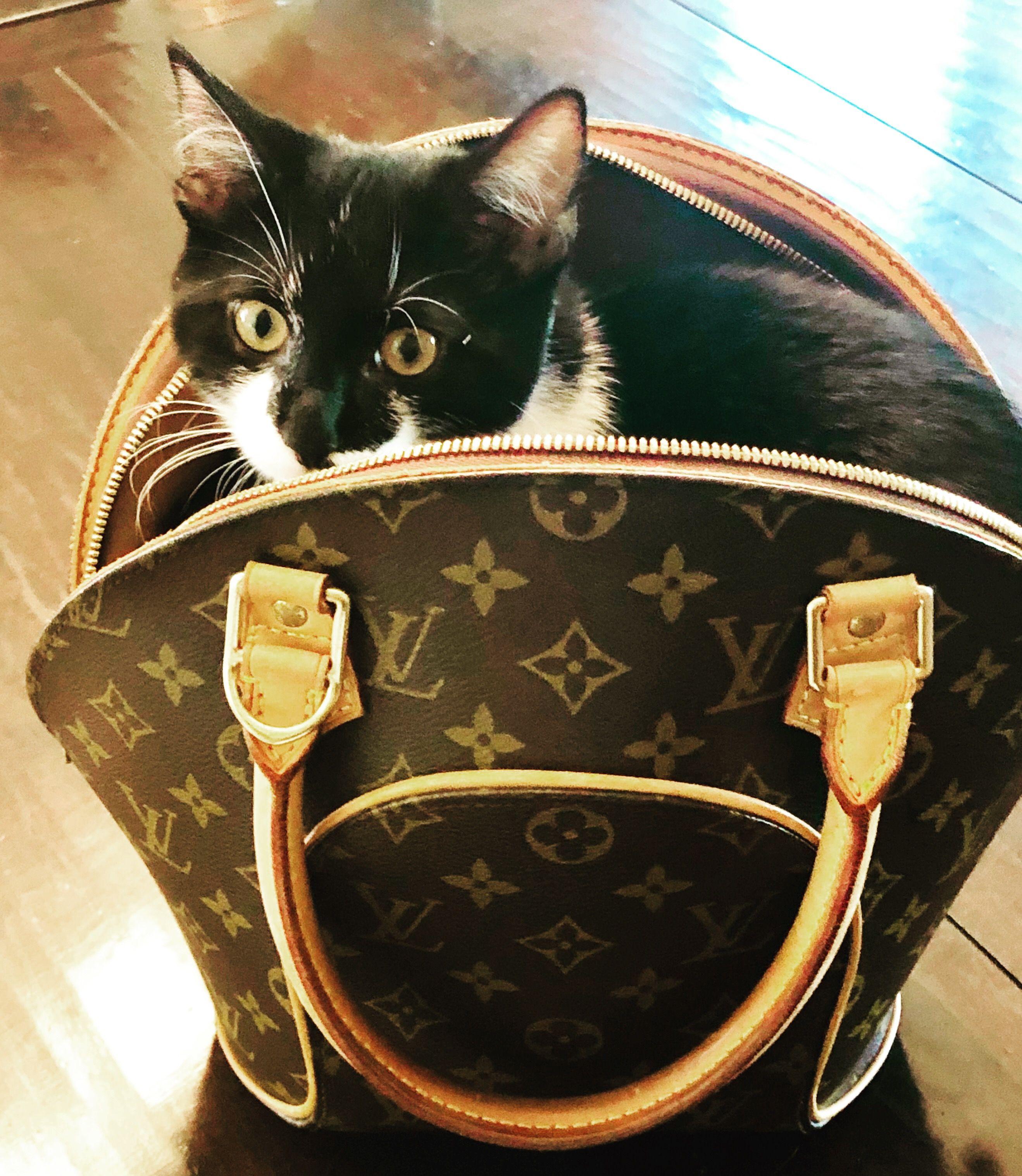 Purse Kitten Louis Vuitton Monogram Purses Vuitton