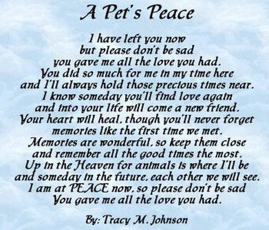 Pin By Janice Cason On Feelings Pinterest Pets Pet Loss And Dogs Mesmerizing Dog Loss Quotes