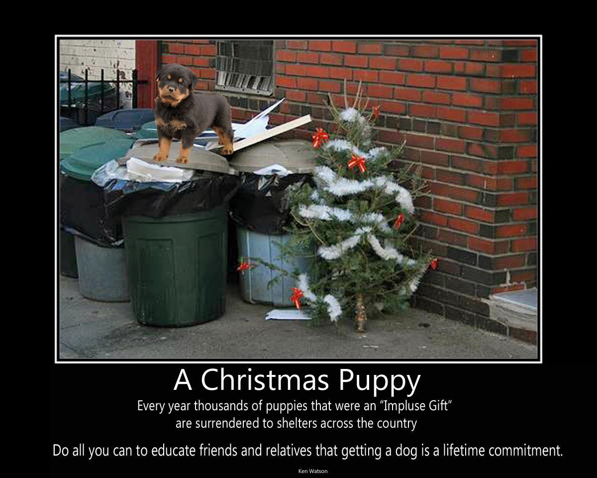 Pets aren't presents. | Animal Welfare Advocates | Pinterest ...