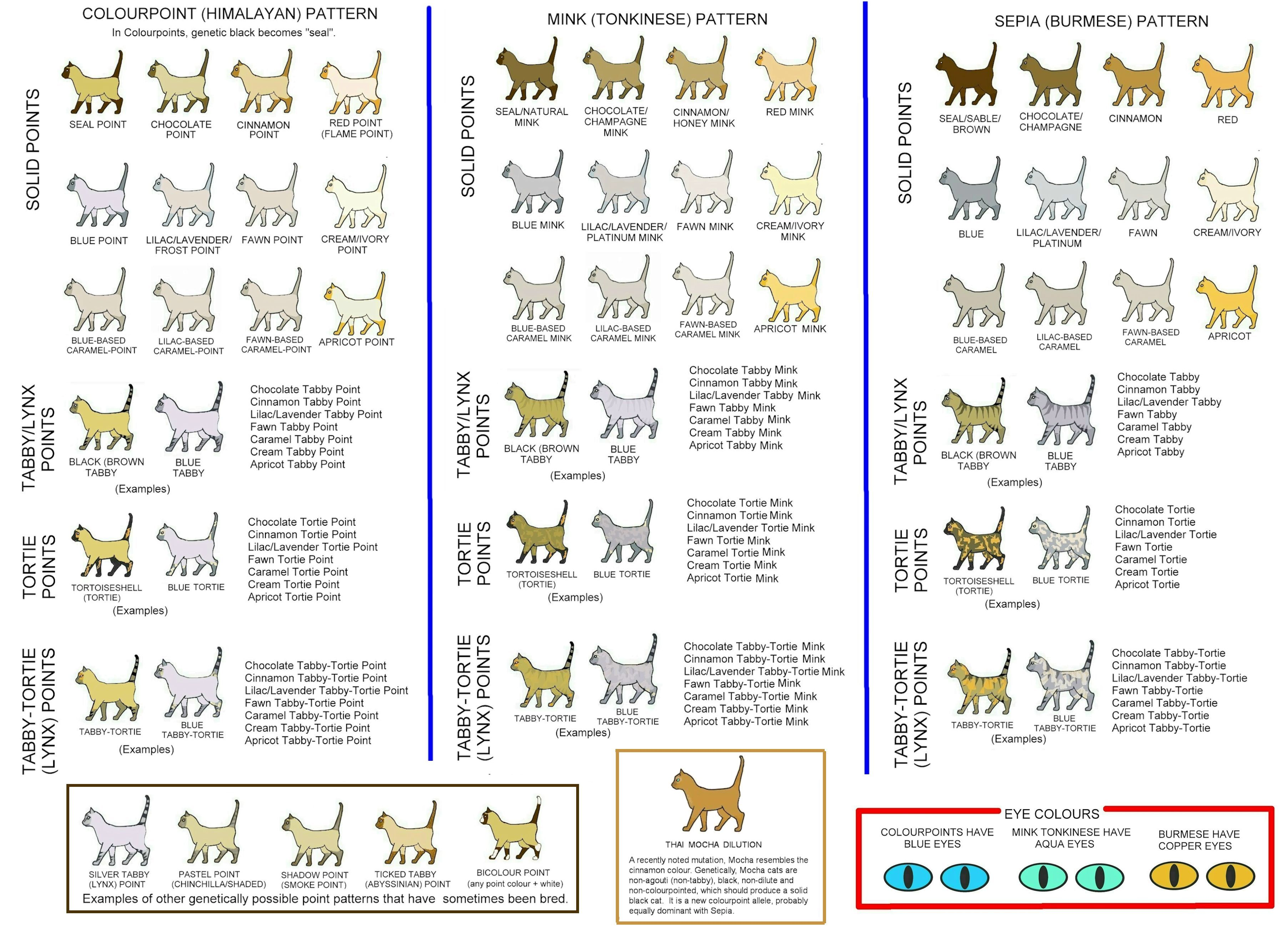 Cat Colours Diagram Chart Cat Colors Cat Breeds Chart Orange Cats