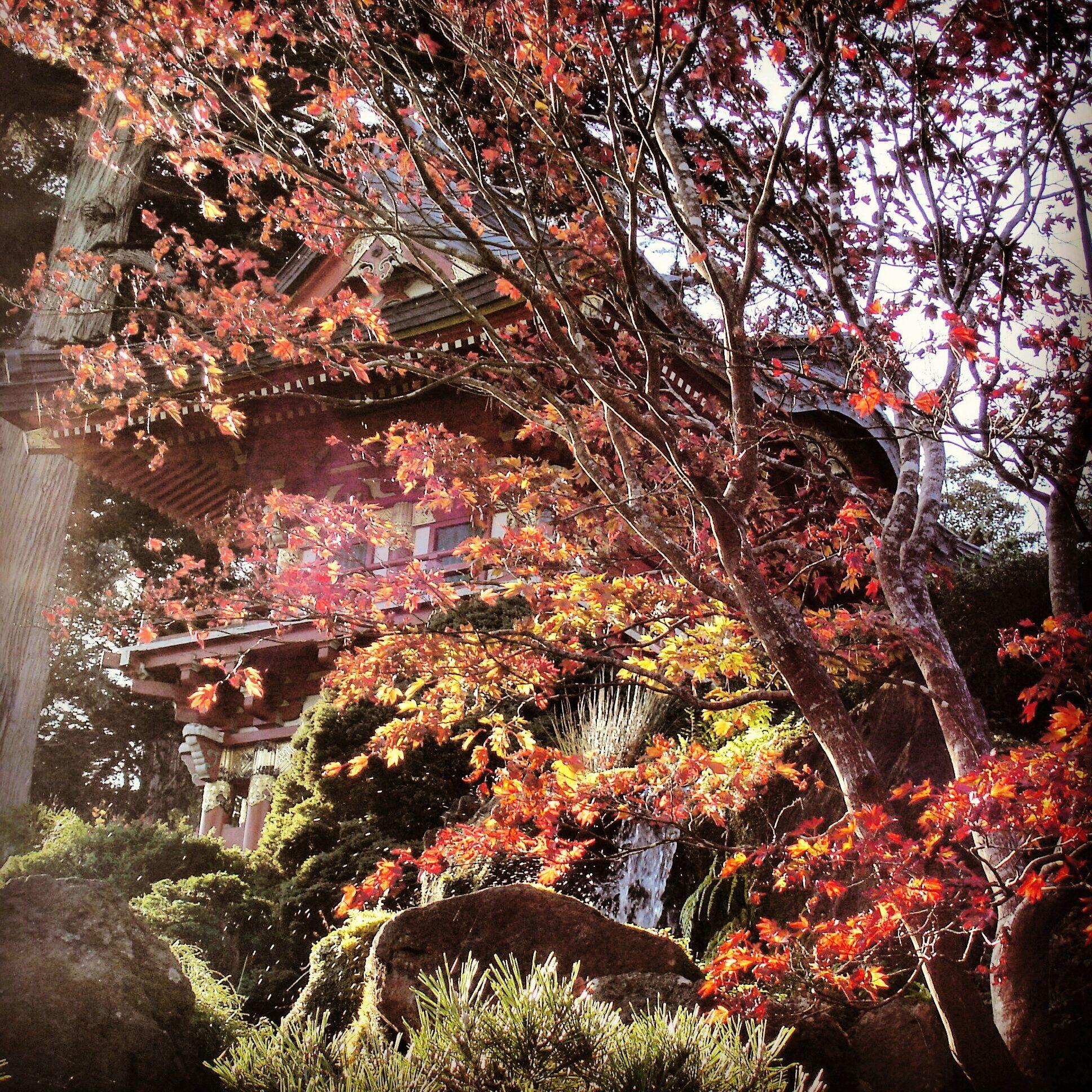 Japanese Tea Gardens at Golden Gate Park, San Francisco | My ...