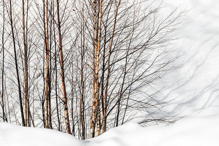 Winter Light and Shadows