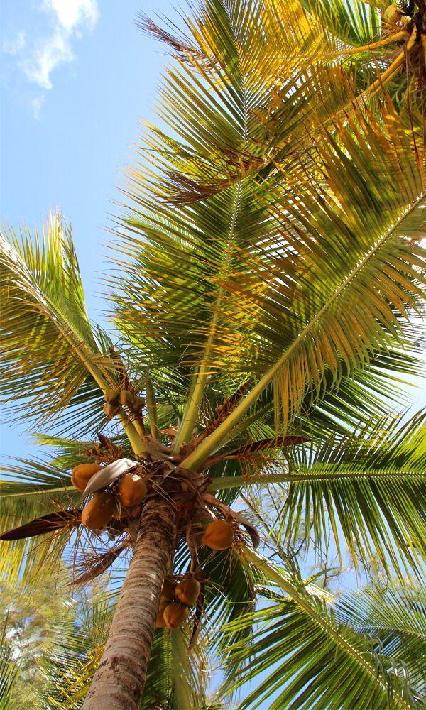 site de rencontre avec un palmier