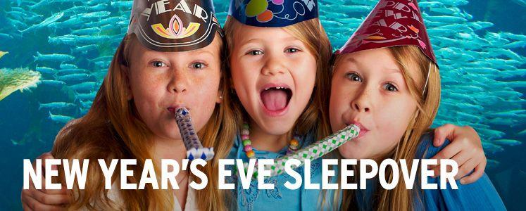 New Years Eve Sleepover at the Monterey Bay Aquarium! Yes ...
