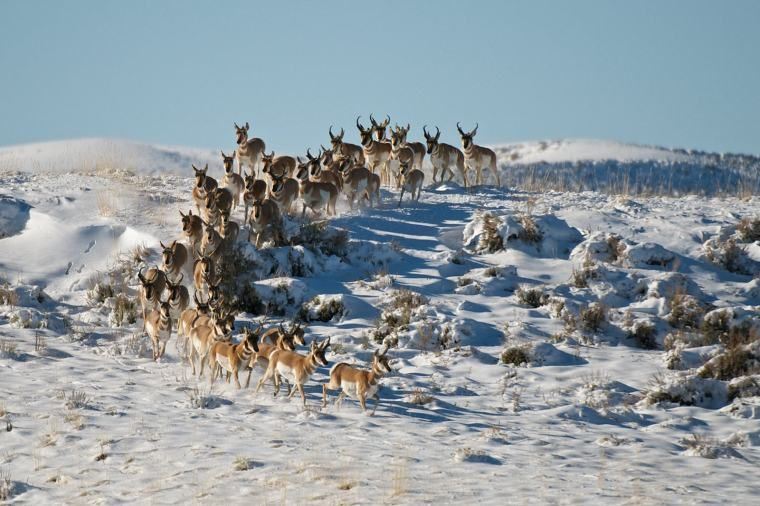 13++ Animals that migrate in winter images
