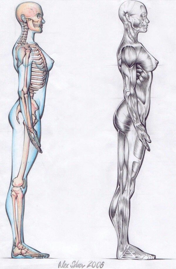 Pin de Torres David en Anatomía,Bocetos,Tutoriales. | Pinterest