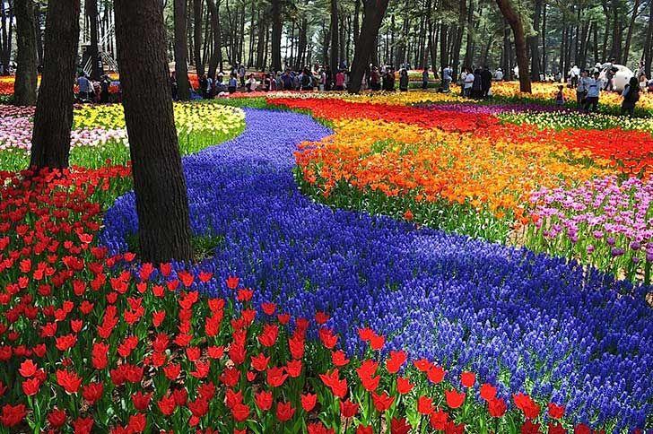 Imágenes de los hermosos jardines japoneses del Parque Costero