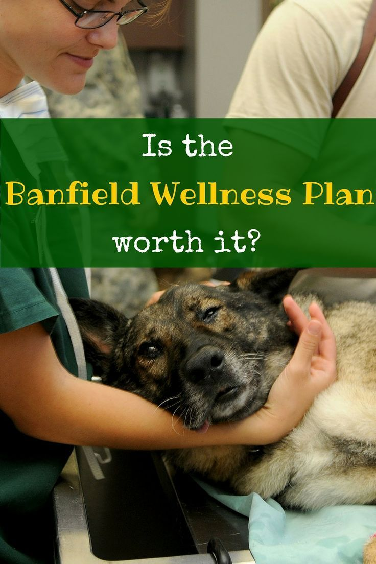 Petsmart S Banfield Hospital Offers Optimum Wellness Plans For Your Pets They Re Pricey But Are They Worth It Http Itz Wellness Plan How To Plan Wellness