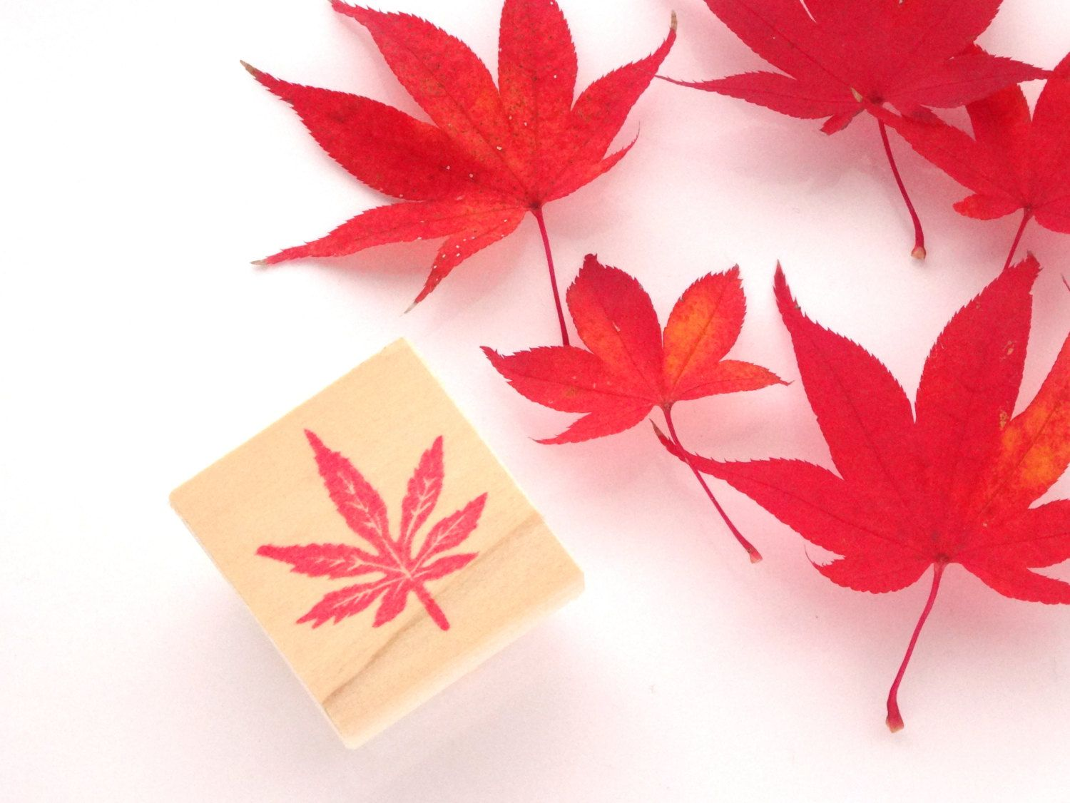 Japanese maple rubber stamp, Wedding invitations, Fall decor ...