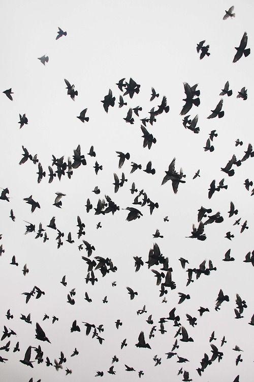 Schwalben | Fotographie | Pinterest | Fliegen, Schwarz weiß und ...