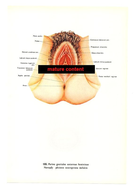 Vagina Anatomical Prints 2 Vintage Illustration Medical Mature