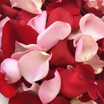 The Red and Pink Rose Petal mix is a delightful blend of light pink and red rose petals. These petals are made to order just for your wedding ceremony, reception, or special event. FiftyFlowers rose petals have a soft, velvety feel and natural fragrance. Our fresh petals are shipped from our Ecuadorian farms directly to your doorstep in convenient plastic bags making them incredibly easy to use.