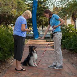 Dog Training Class In Session At Sarasota Location Dog Training