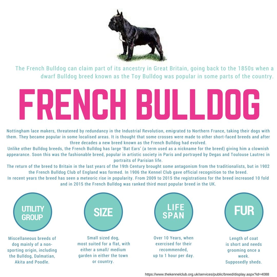 French Bulldog Breed Information French Bulldog Breed French