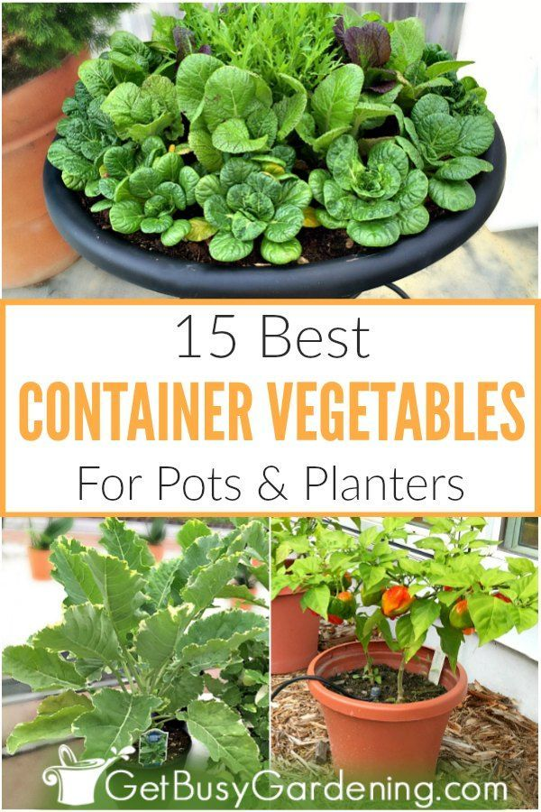 15 Best Container Vegetables For Pots Planters Container Vegetables Container Gardening Vegetables Growing Vegetables In Pots