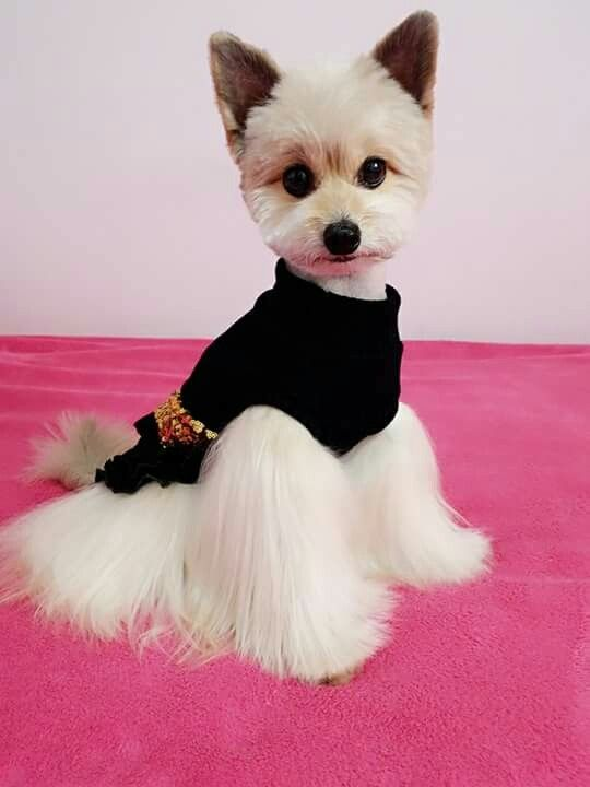 Asian style doggy trim. | Cute puppies, Best dog photos
