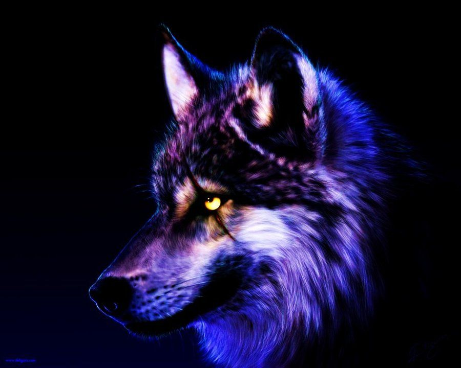 Cool Purple Wolves Unusual Fixed Wolf Wallpaper By