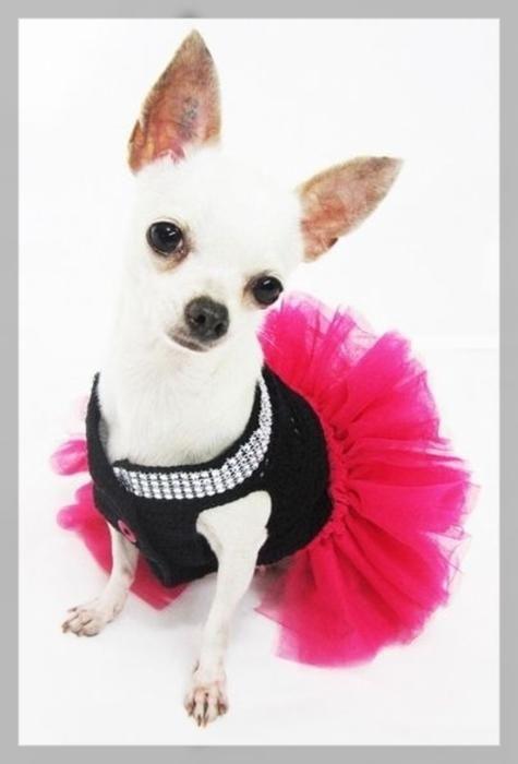 vestidos de novia en chihuahua | vestidos para perritas | Pinterest ...