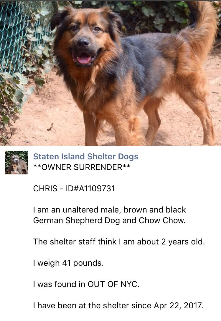 Rto Safe 4 27 17 Staten Island Chris A1109731 Male Brown