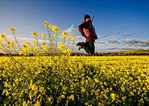 Mustard field, Fremont, CA