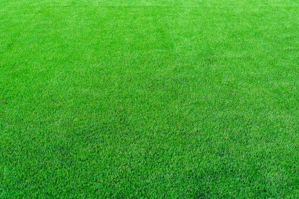 Green Grass Texture Background In Soccer Field Selective Focus Grass Textures Textured Background Green Grass